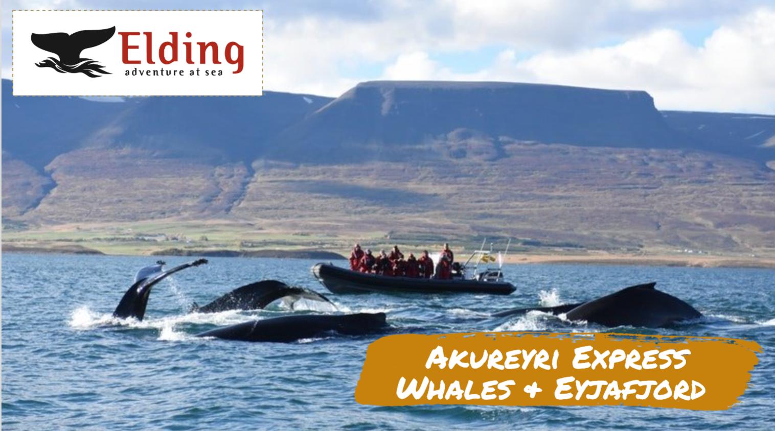 Akureyri Express Whales & Eyjafjord